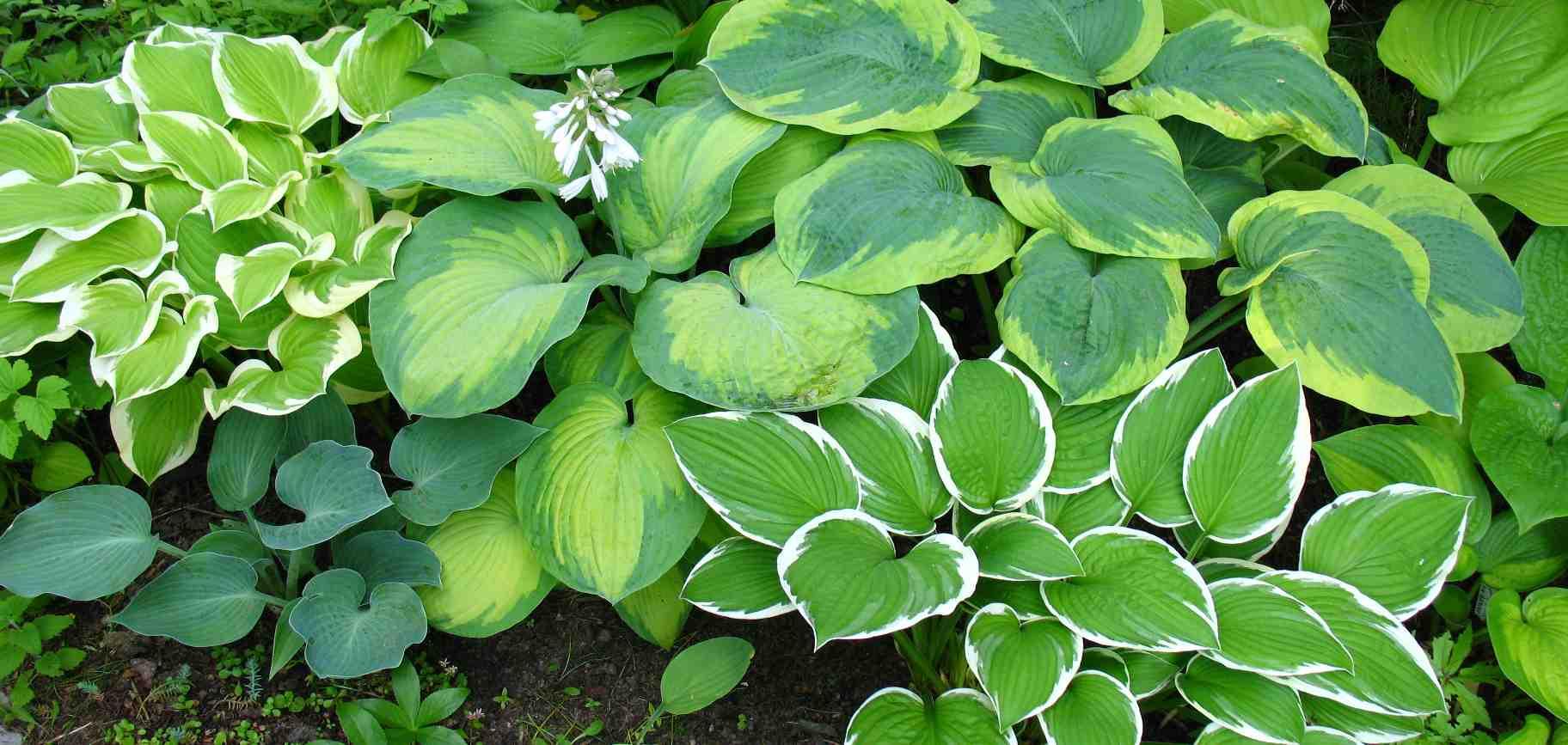 Сад флоранс колоколенковы